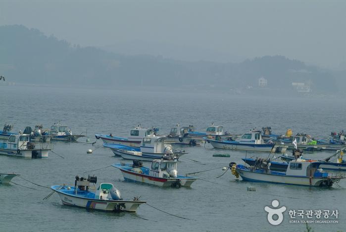 Jukdo Island (Boryeong) (죽도 (보령))