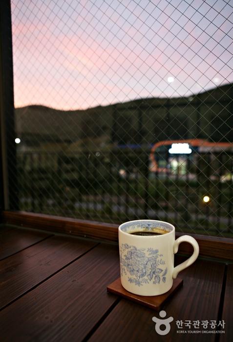 북천역에 와서 코스모스를 둘러보고 커피 한 잔