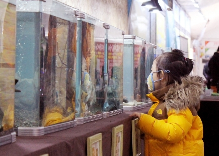 Hongcheon River Ginseng Trout Festival (홍천강 인삼송어 축제)