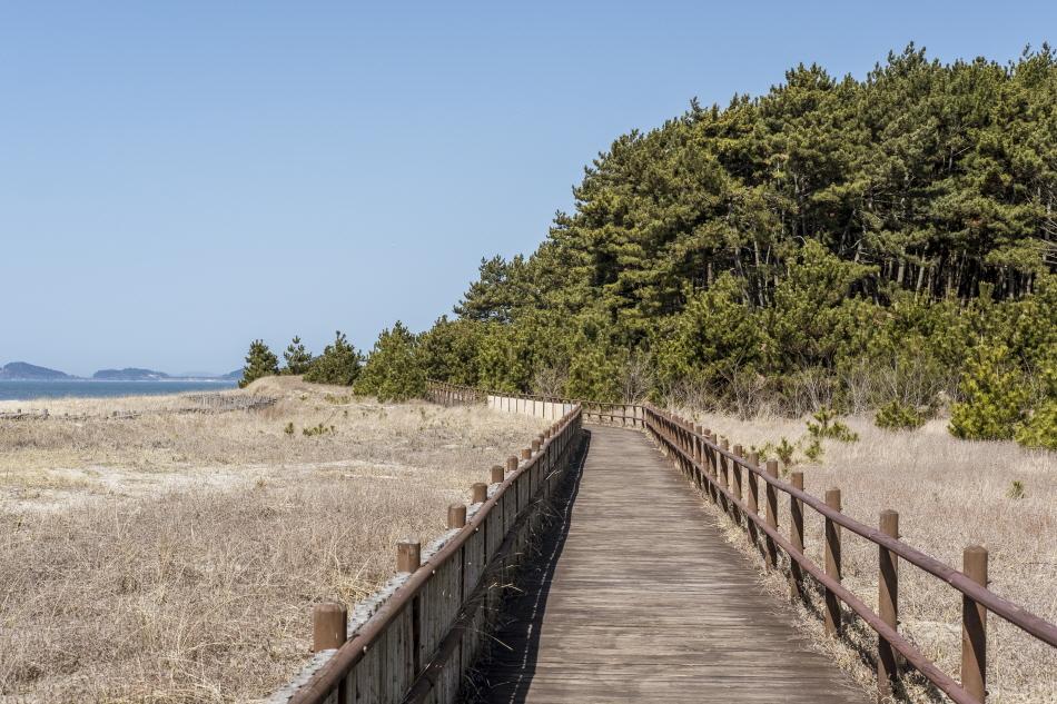 해안사구와 울창한 소나무 숲이 이어지는 태안해안국립공원 기지포해변 탐방로
