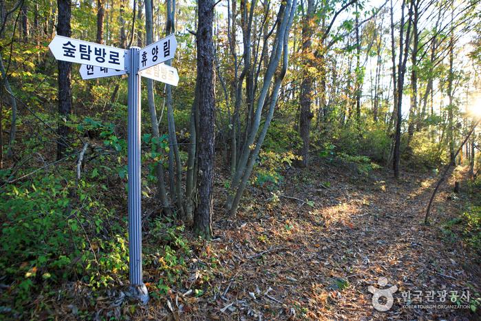 국립 천관산자연휴양림