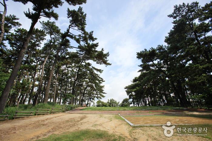 Парк Тэванам (대왕암공원)11