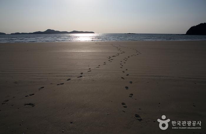 우리나라 최대의 신두리 해안사구 고운 모래를 밟아보자.