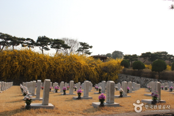 Seoul National Cemetery Event with Weeping Cherry Blossoms (수양벚꽃과 함께하는 열린 현충원 행사)