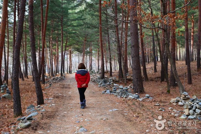강릉 대기리마을