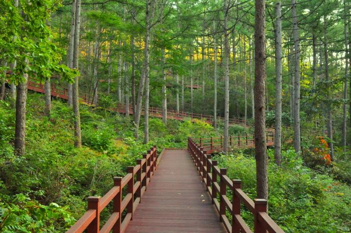 국립산림치유원