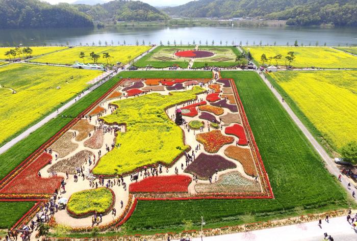 Фестиваль цветения рапса на реке Нактонган (낙동강 유채축제)