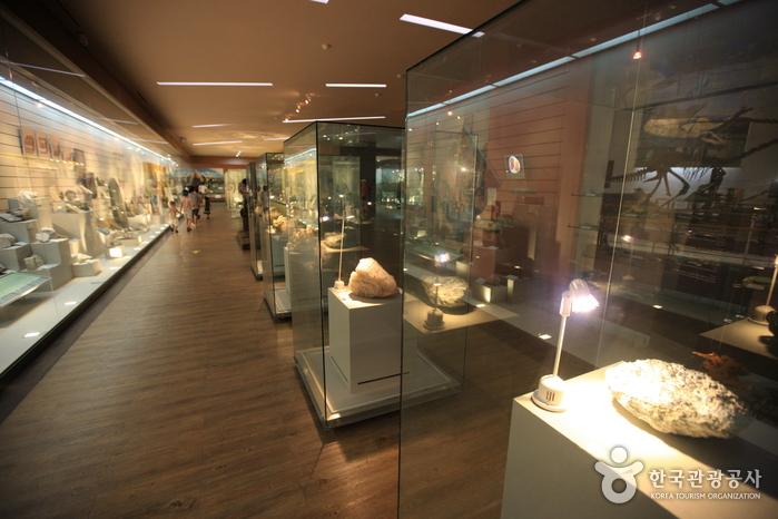 Музей естествознания Мокпо (목포자연사박물관)15