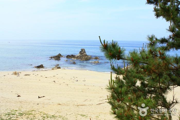 Samcheok Ocean Railbike (삼척 해양레일바이크)