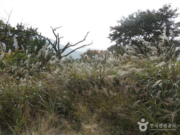 Provinzpark Gajisan (가지산도립공원)