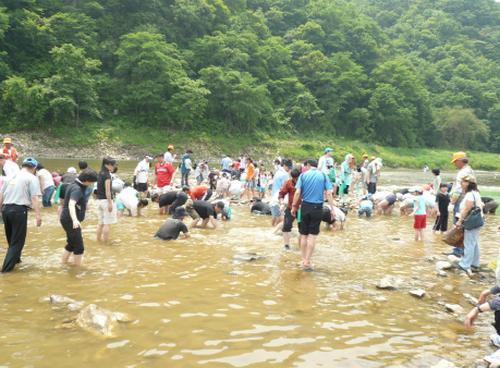 Pyeongchang Gondeure (Korean thistle) Festival (평창 곤드레축제)