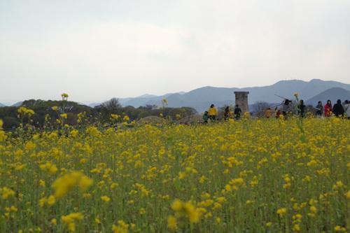 Gyeongju Historic Area [UNESCO World Heritage] (경주역사유적지구[유네스코 세계문화유산])