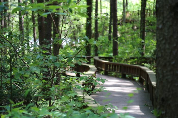 전나무 숲 아래 데크 로드
