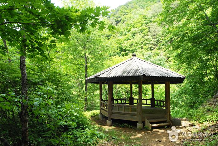 국립 복주산자연휴양림