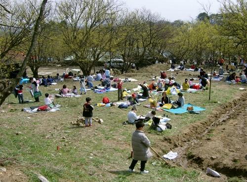 Festival de las Flores de Sansuyu Baeksa en Icheon (이천 백사 산수유꽃축제)