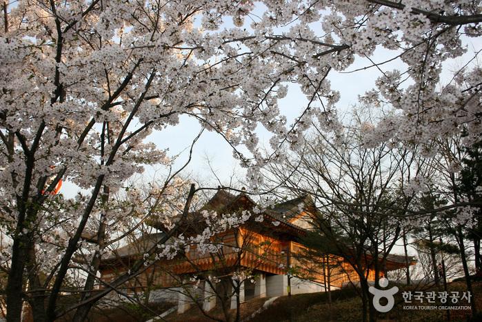 영등포 여의도 봄꽃축제 2015