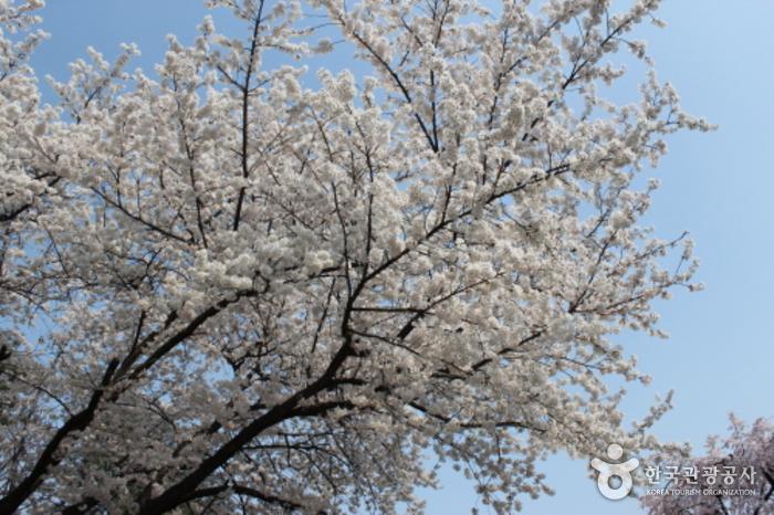 Seoul National Cemet...