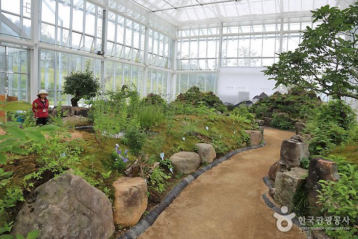 Тематическая деревня Тонипогамчхон (Тематический парк восточной медицины Санчхон) (동의보감촌 (산청한방테마파크))7