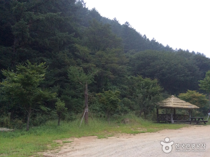Kwangchi Recreational Forest (광치자연휴양림)