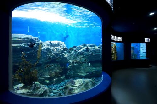 Aqua Planet(丽水)아쿠아플라넷(여수)