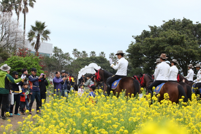 Seogwipo Yuchae (Canola) Flower International Walking Festival (서귀포유채꽃국제걷기대회)