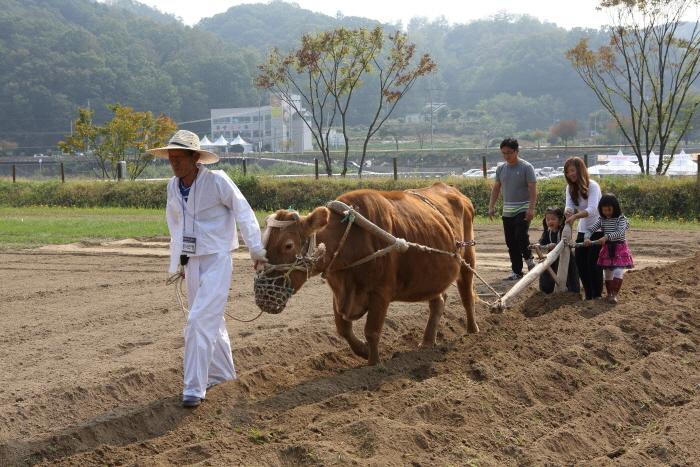 [有望祭り] 横城韓牛祭り([유망축제] 횡성한우축제)