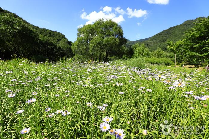 문경새재 도립공원, 길 위의 역사