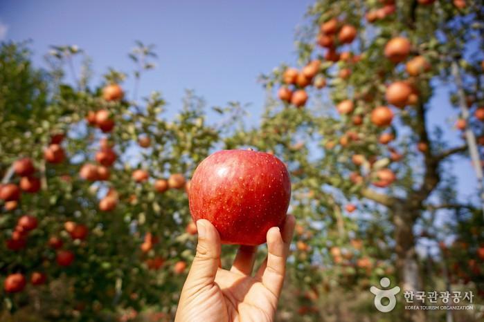 빨간 사과 하나를 들어올린 손