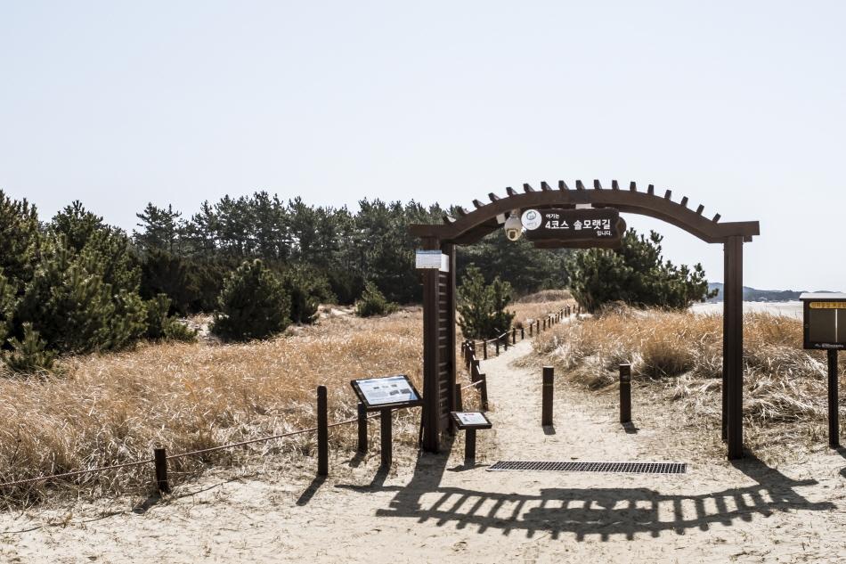 태안해변길 4코스 '솔모랫길'은 몽산포와 드르니항을 잇는다.