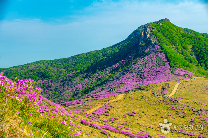 Berg Hwangmaesan (황매산)