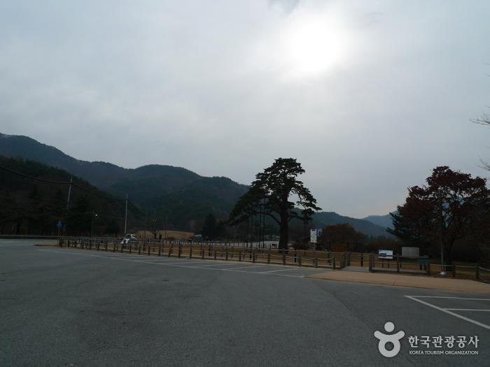 Jeongipum Pine Tree (보은 속리 정이품송)