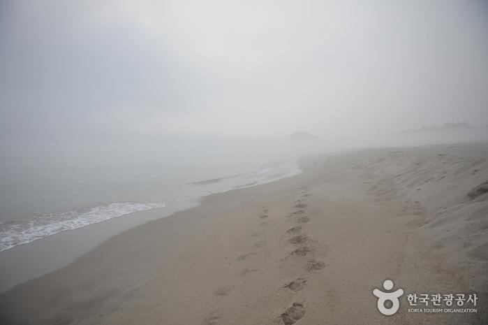 하맹방해변
