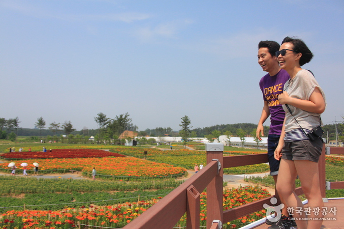 Closed: TAEAN F Festival (태안 백합꽃축제)