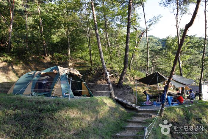 꿈꾸는 캠핑장