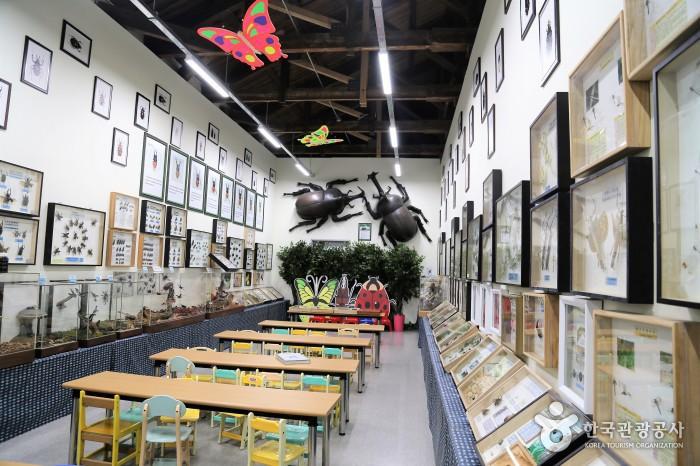 표본전시실 내부 - 벽면에 다양한 곤충표본이 있고 어린아이 책상이 나열되어 있는 공간