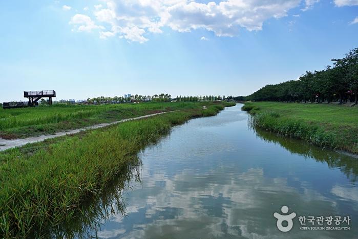 Экологический парк Кэтколь в Сихыне (시흥 갯골생태공원)6