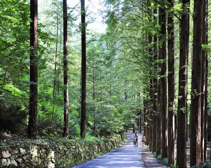 Erholungsbergwald Jangtaesan (장태산자연휴양림)
