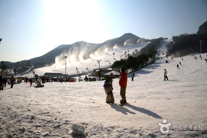 Jisan Forest Ski Resort (지산 포레스트 리조트 스키장)
