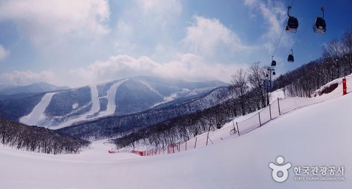 High 1 Ski Resort (하이원리조트 스키장)
