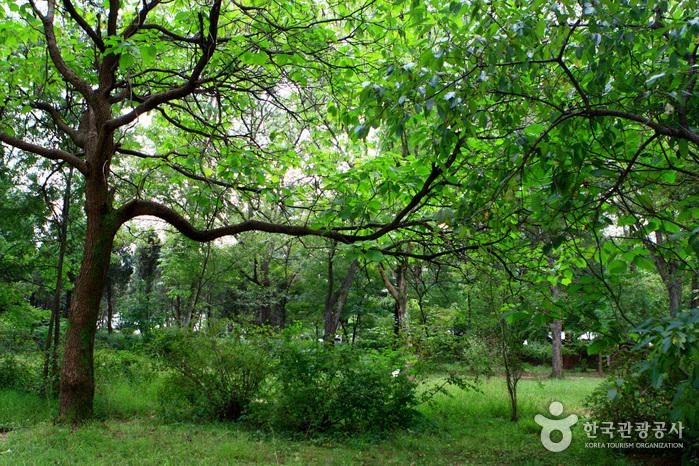 京畿道立水香树木园(경기도립 물향기수목원)