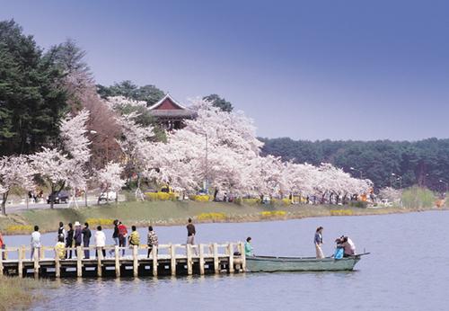 경포대 벚꽃축제 2017 사진2