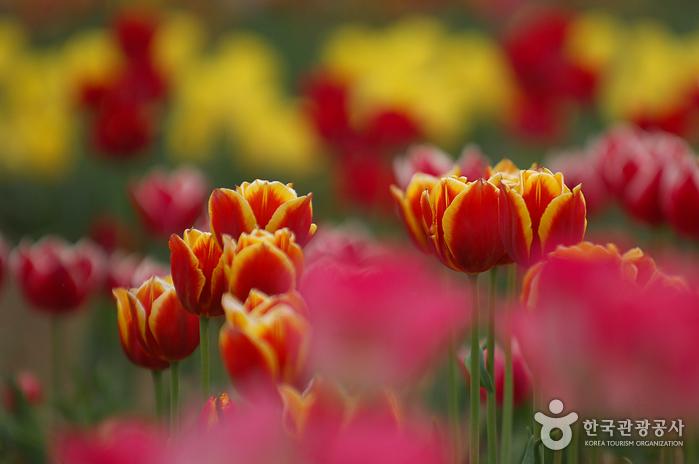 Geoje Island Flower ...