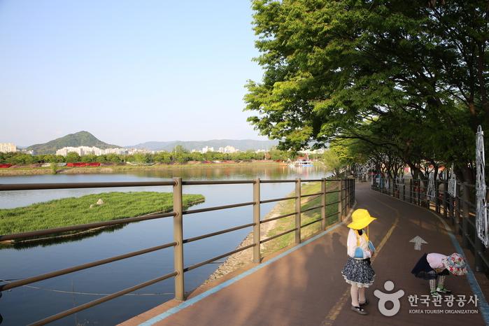 Парк Кончжичхон (공지천(황금비늘테마거리))2