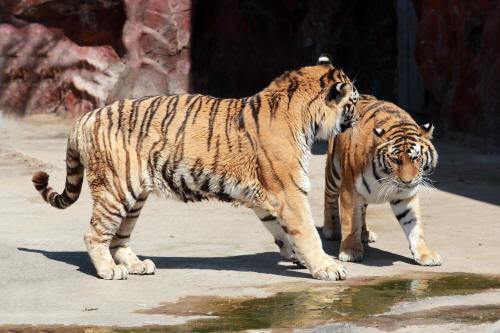 광주 우치공원 동물원