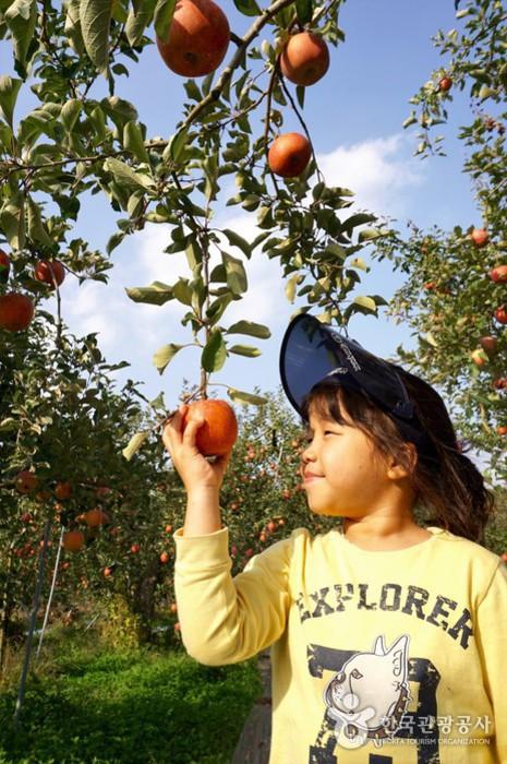 나무에 매달린 사과를 잡고 웃고 있는 여자아이