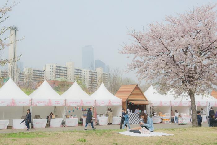 Lifeplus桜ピクニックフェスティバル(Lifeplus 벚꽃피크닉페스티벌)