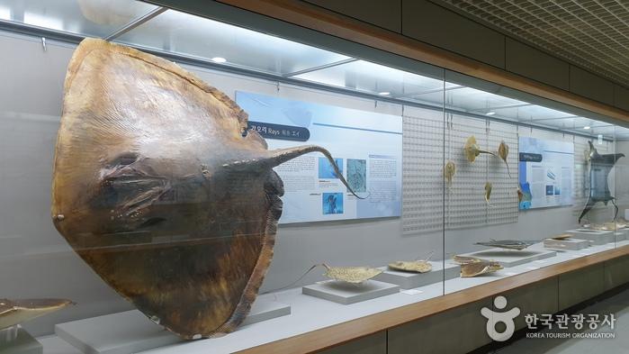 Природно-исторический музей моря Пусана (부산해양자연사박물관)3