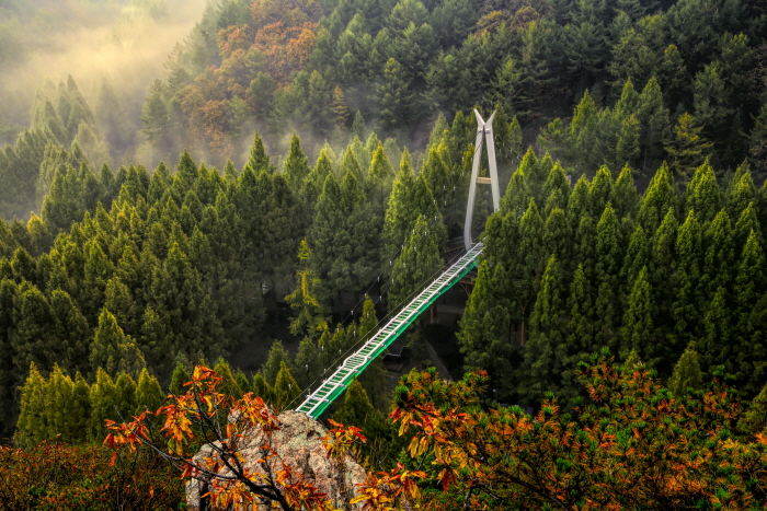 Erholungswald Jangtaesan (장태산자연휴양림)