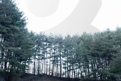 봉화 금강소나무림