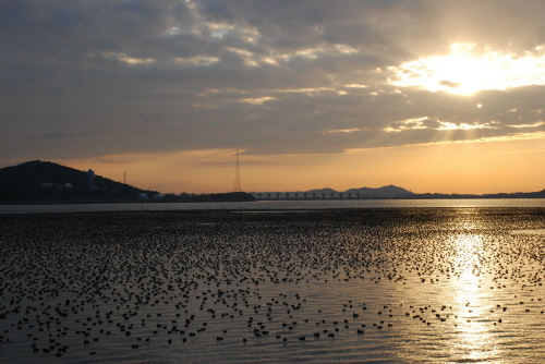 Trash: Gunsan International Migratory Bird Festival (군산세계철새축제)